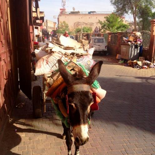 Marrakech_Mule